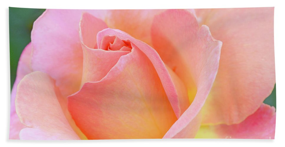 Pink Rose Beach Towel featuring the photograph Tea Rose-elle by Regina Geoghan