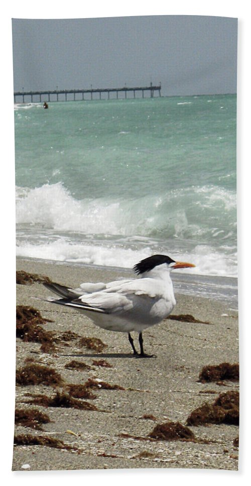 Florida Beach Towel featuring the photograph Tern's View Gp by Chris Andruskiewicz