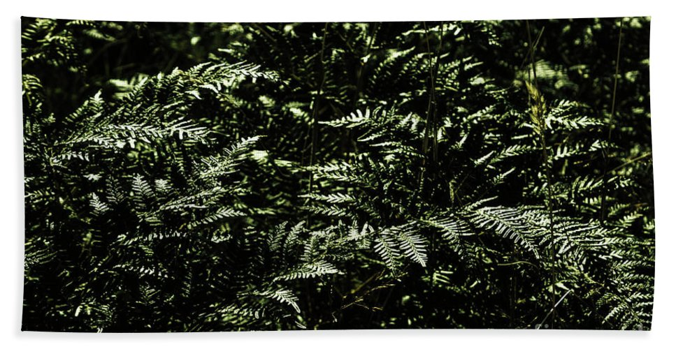 Green Beach Towel featuring the photograph Textures Of A Rainforest by Jorgo Photography - Wall Art Gallery