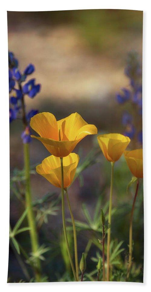 Poppies Beach Towel featuring the photograph That Golden Poppy Glow by Saija Lehtonen
