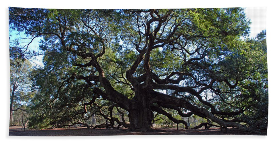 Photography Beach Towel featuring the photograph The Angel Oak in Spring by Susanne Van Hulst
