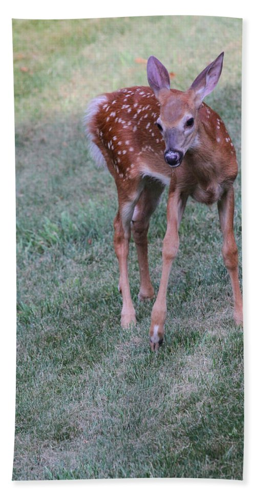 Deer Beach Towel featuring the photograph The Bambi Stance by Karol Livote