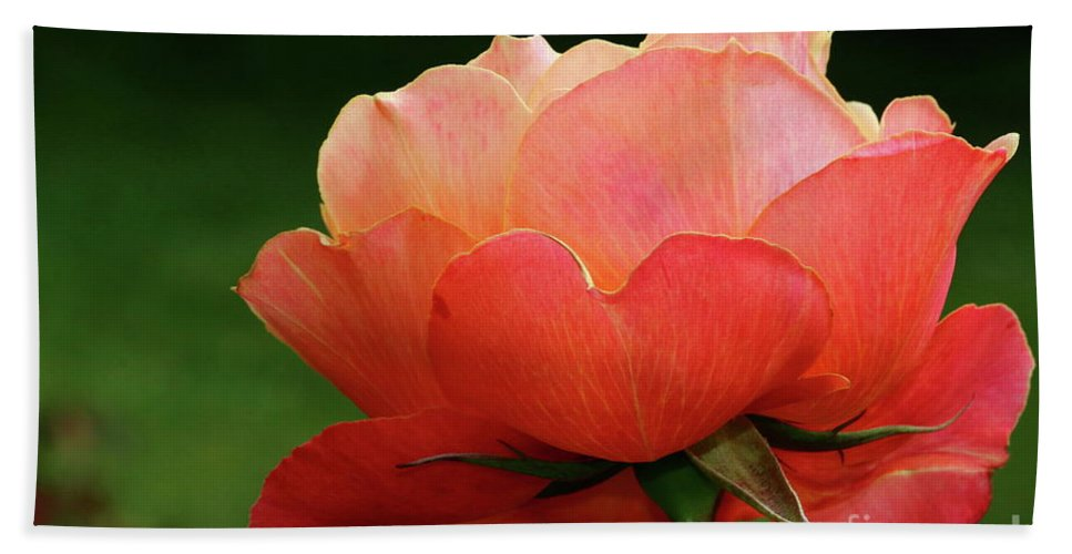 Rose Beach Towel featuring the photograph The Beauty Of A Rose by Christiane Schulze Art And Photography