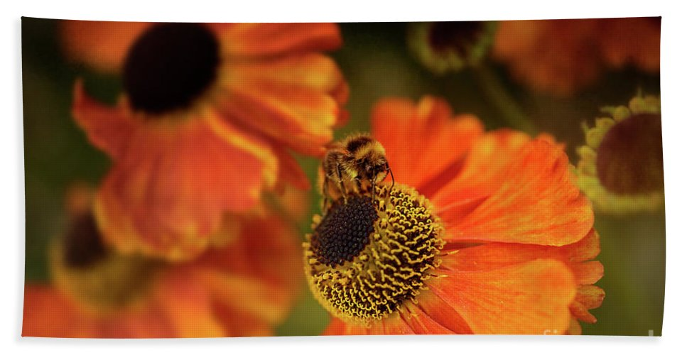The Bee And The Helenium Beach Towel featuring the photograph The Bee And The Helenium by Ann Garrett