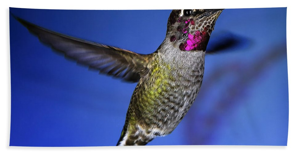 Birds Beach Towel featuring the photograph The Best Feature by William Freebilly photography
