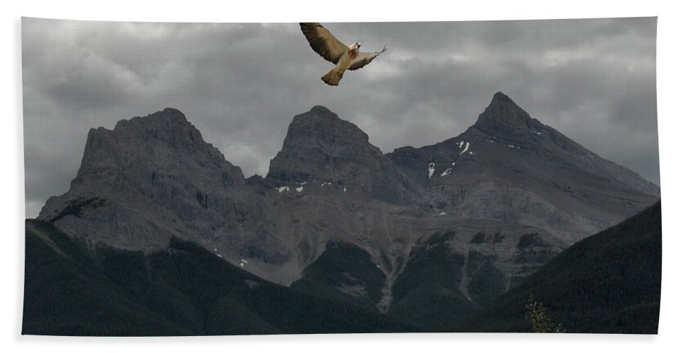 Hawk Mountains Trees Woods Banff Alberta Wild Bird Hunter Flying Three Sisters Beach Towel featuring the photograph The Calling by Andrea Lawrence