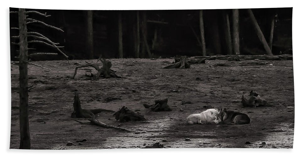 Canyon Pack Beach Towel featuring the photograph The Canyon Alphas B/w by Steven Clevidence