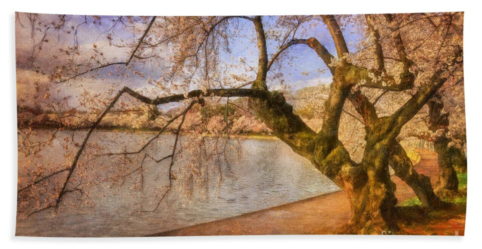Trees Beach Towel featuring the photograph The Cherry Blossom Festival by Lois Bryan