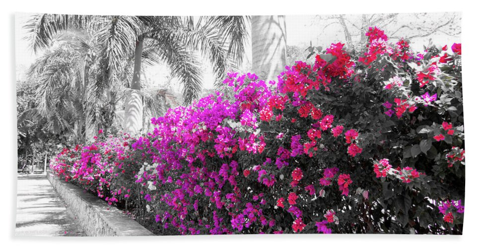 Bougainvillea Beach Towel featuring the photograph The Color Purple by Douglas Barnard