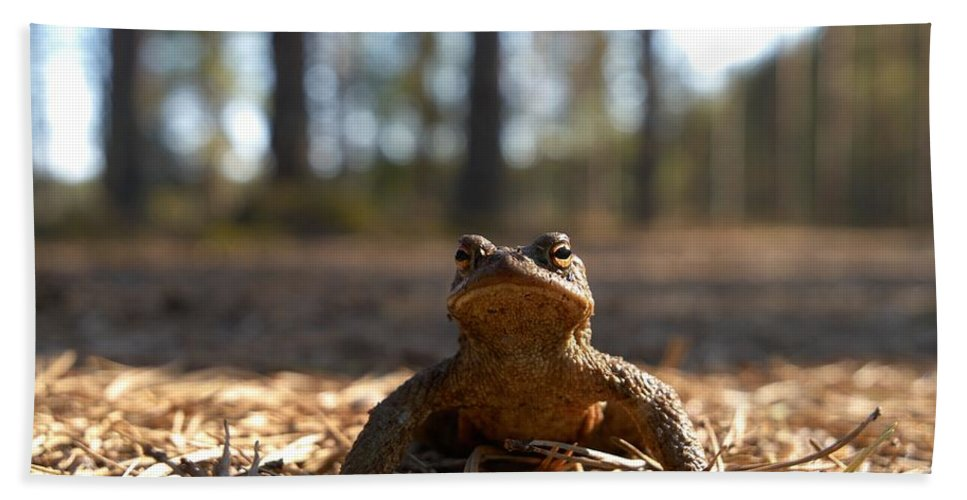 Seitseminen Beach Towel featuring the photograph The Common Toad 3 by Jouko Lehto