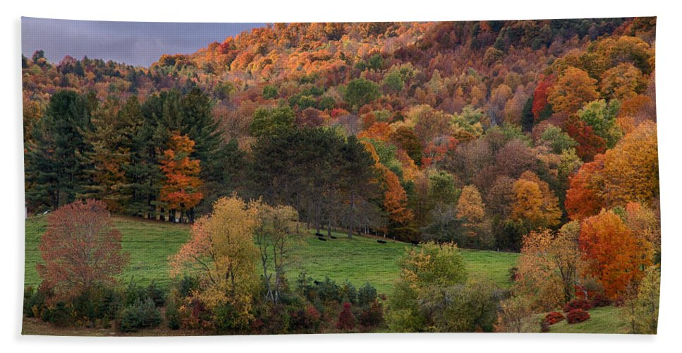 #jefffolger Beach Towel featuring the photograph The Cows Are In The Dell by Jeff Folger
