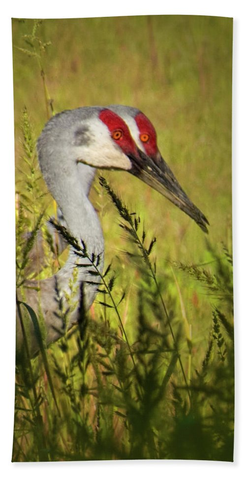 Bird Beach Towel featuring the photograph The Duo - Two Sandhill Cranes by Mitch Spence