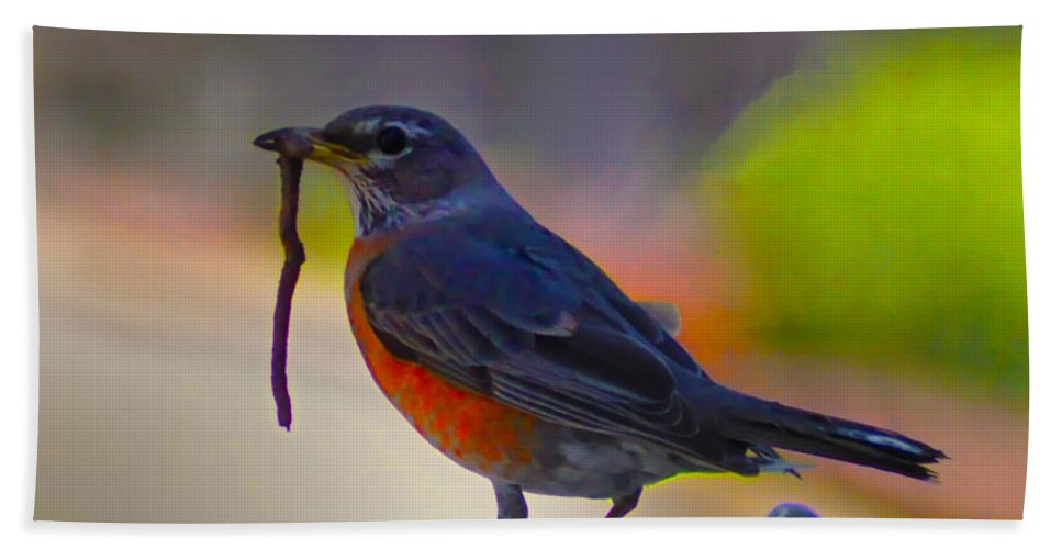 Robin Beach Towel featuring the photograph The Early Bird by Bill Cannon