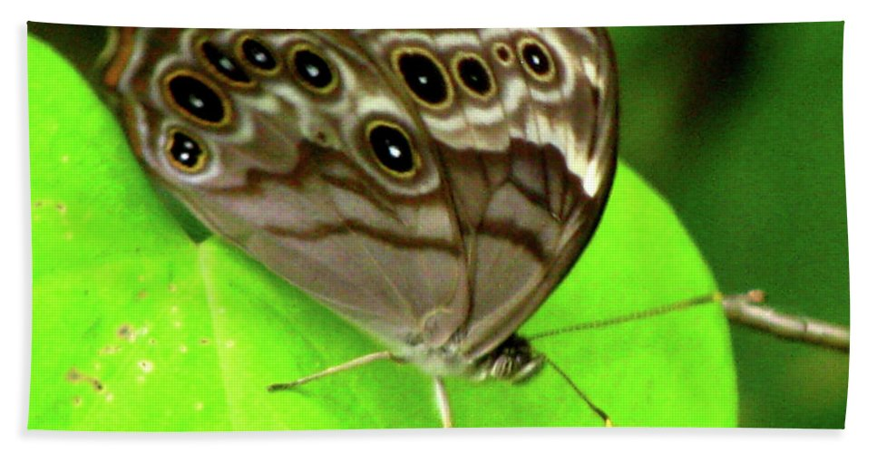 Butterfly Beach Towel featuring the photograph The Eyes Are Watching At You by Donna Brown
