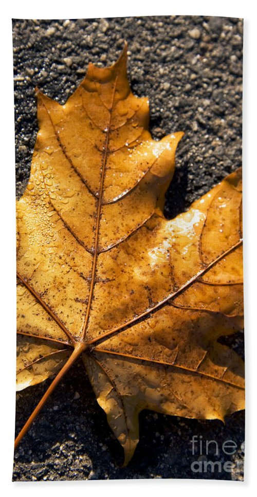 Autumn Beach Towel featuring the photograph The Fall Of Autumn by Jorgo Photography - Wall Art Gallery