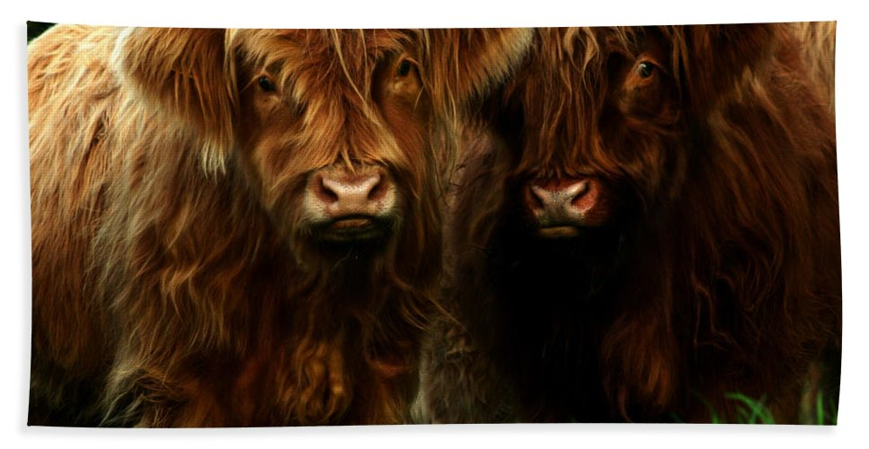 Heilan Coo Beach Towel featuring the photograph The Fluffy Cows by Angel Ciesniarska