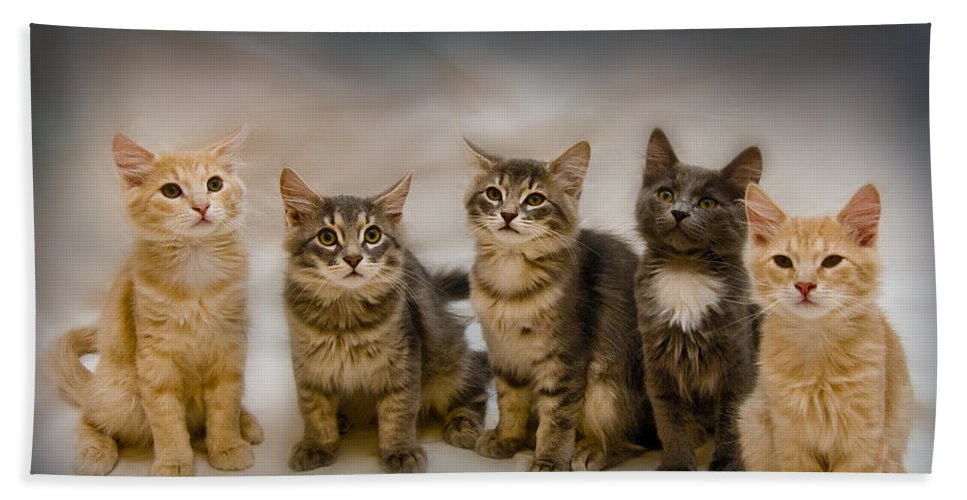The Gang Beach Towel featuring the photograph The Gang by Steven Richardson