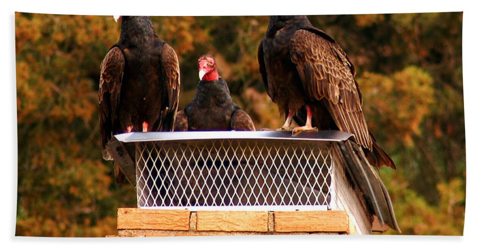 Clay Beach Towel featuring the photograph The Gathering Of Vultures by Clayton Bruster