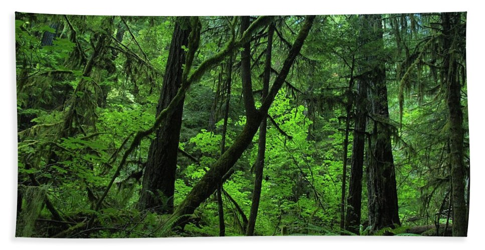 Forest Beach Towel featuring the photograph The Glorious Green by Teri Schuster