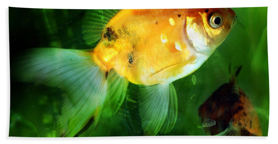 Fish Beach Sheet featuring the photograph The Goldfish by Angel Ciesniarska