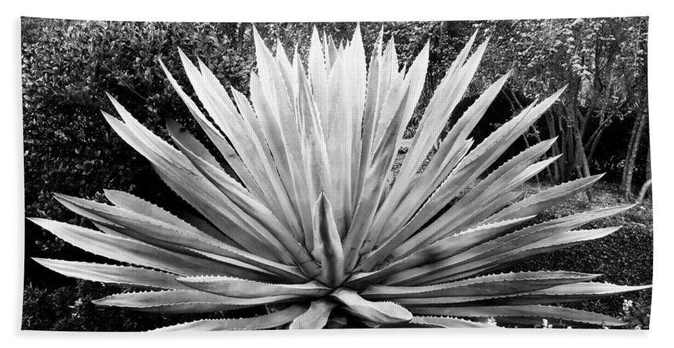 Agave Beach Sheet featuring the photograph The Great Agave by David Lee Thompson