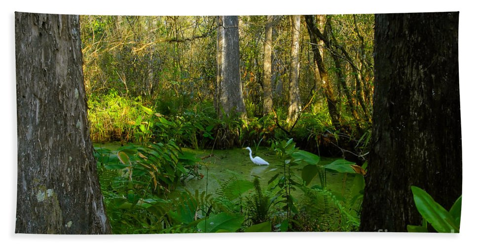 Corkscrew Swamp Beach Sheet featuring the photograph The Great Corkscrew Swamp by David Lee Thompson