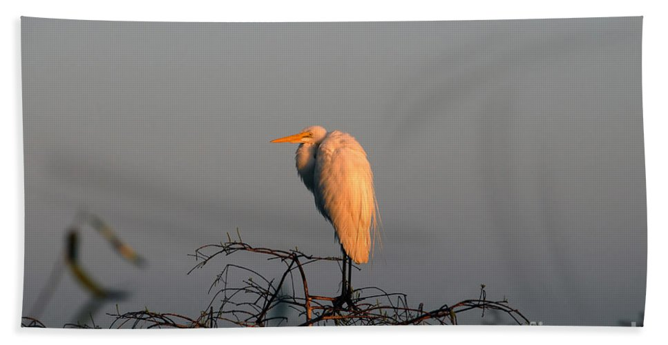Egret Beach Sheet featuring the photograph The Great Egret by David Lee Thompson