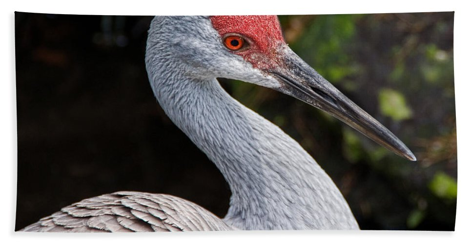 Bird Beach Sheet featuring the photograph The Greater Sandhill Crane by Christopher Holmes