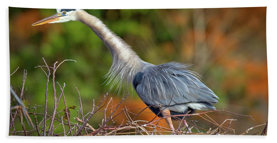 Blue Heron Beach Towel featuring the photograph The Guardian by Dennis Goodman