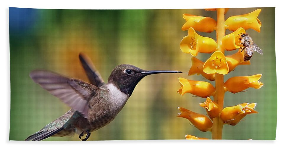 Hummingbird Beach Towel featuring the photograph The Hummingbird And The Bee by William Freebilly photography