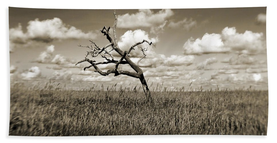 Tree Beach Towel featuring the photograph The Last One Standing - Sepia by Scott Pellegrin