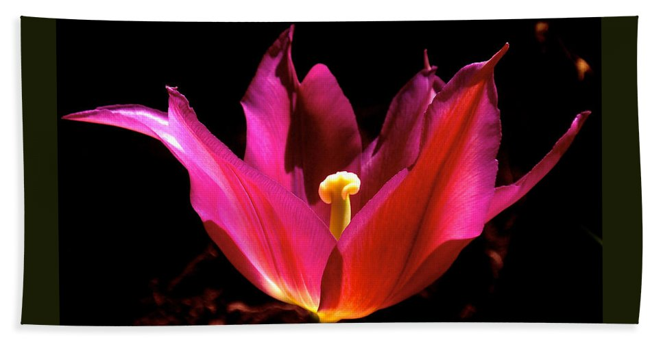 Tulip Beach Towel featuring the photograph The Light Of Day by Rona Black