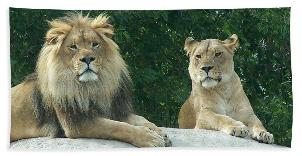 Lion Beach Towel featuring the photograph The Lions by Ernie Echols