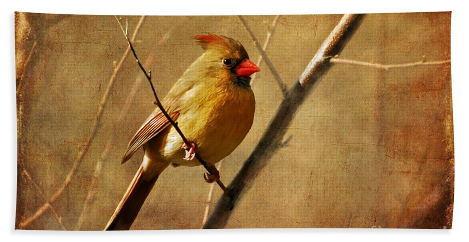 Bird Beach Towel featuring the photograph The Little Mrs. by Lois Bryan