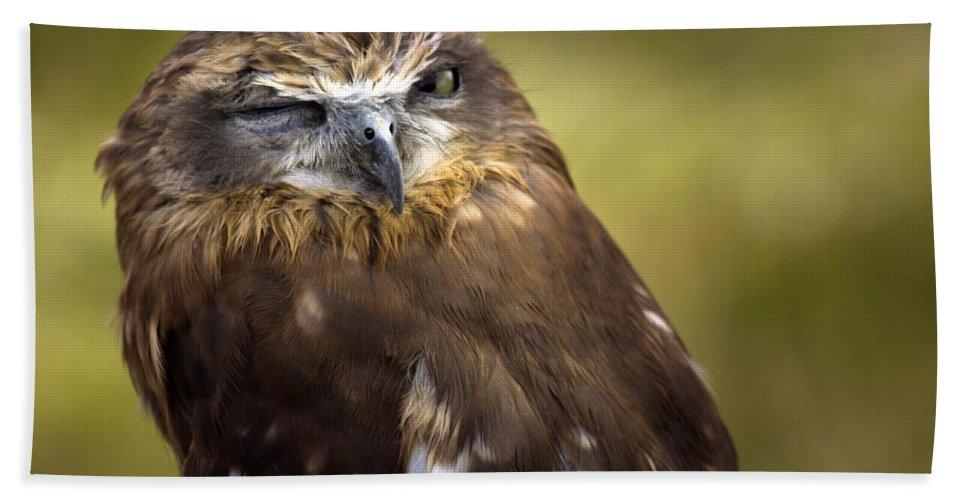 Owl Beach Towel featuring the photograph The Little Owl by Angel Ciesniarska