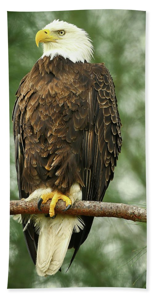 Bald Eagle Beach Towel featuring the photograph The Majestic by Dennis Goodman