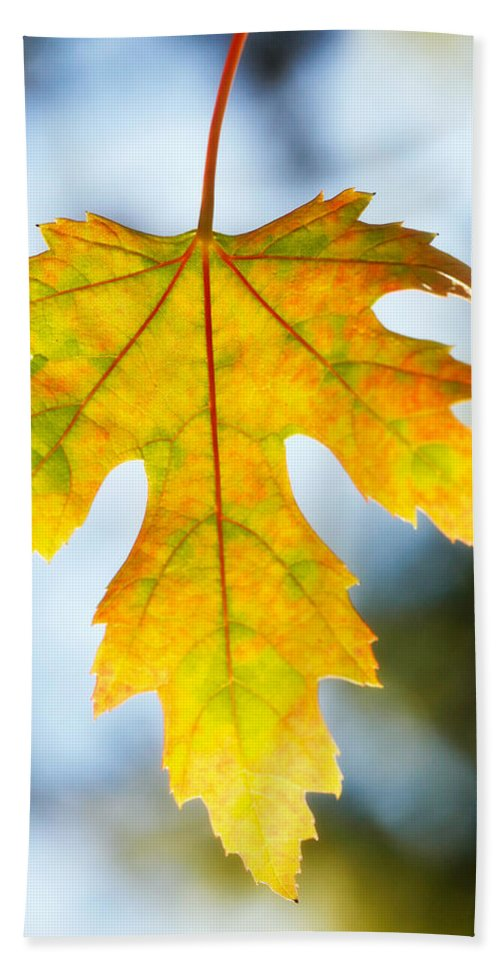 Maple Beach Towel featuring the photograph The Maple Leaf by Marilyn Hunt