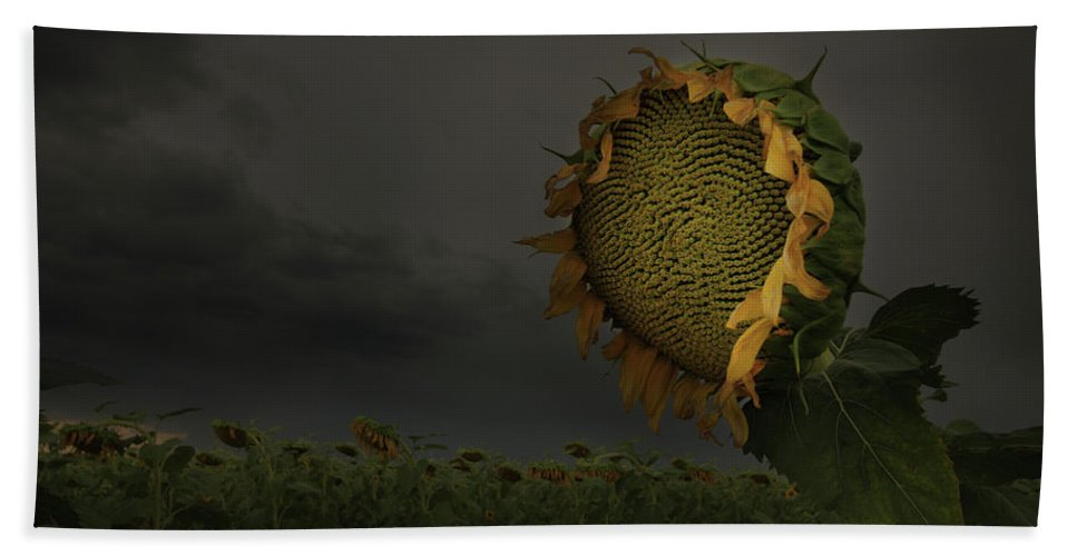 Sunflower Beach Towel featuring the photograph A Sign Of Hope Among A Crowd Of Despair by Brian Gustafson
