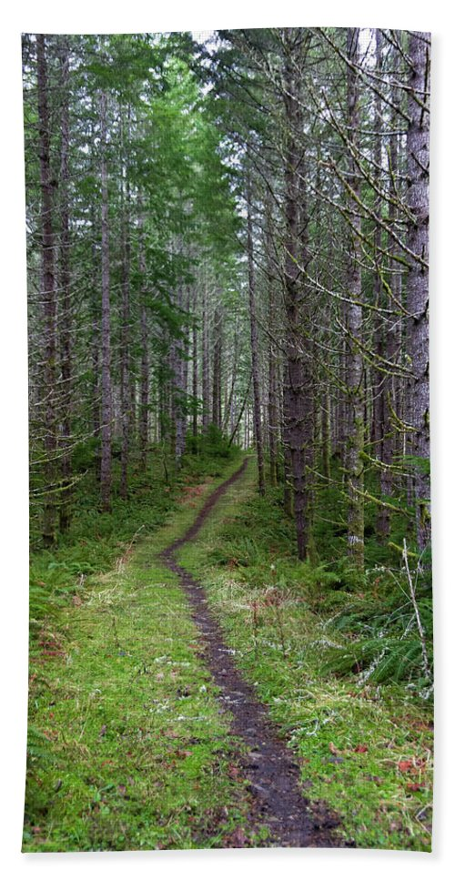 Forests Beach Towel featuring the photograph The Next Leg Of The Journey by Steven Clark