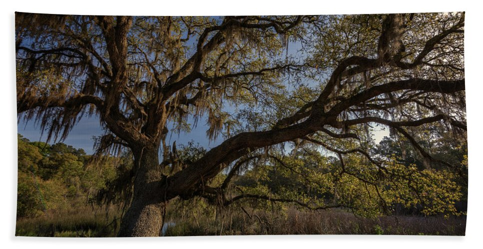 Oak Tree Beach Towel featuring the photograph The Oak By The Side Of The Road by Rick Berk