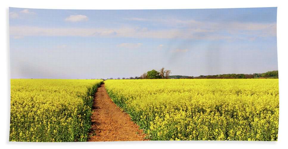 Canola Beach Towel featuring the photograph The Path To Bosworth Field by John Edwards
