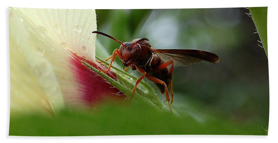Wasp Beach Towel featuring the photograph The Real Gardener by Robert Meanor