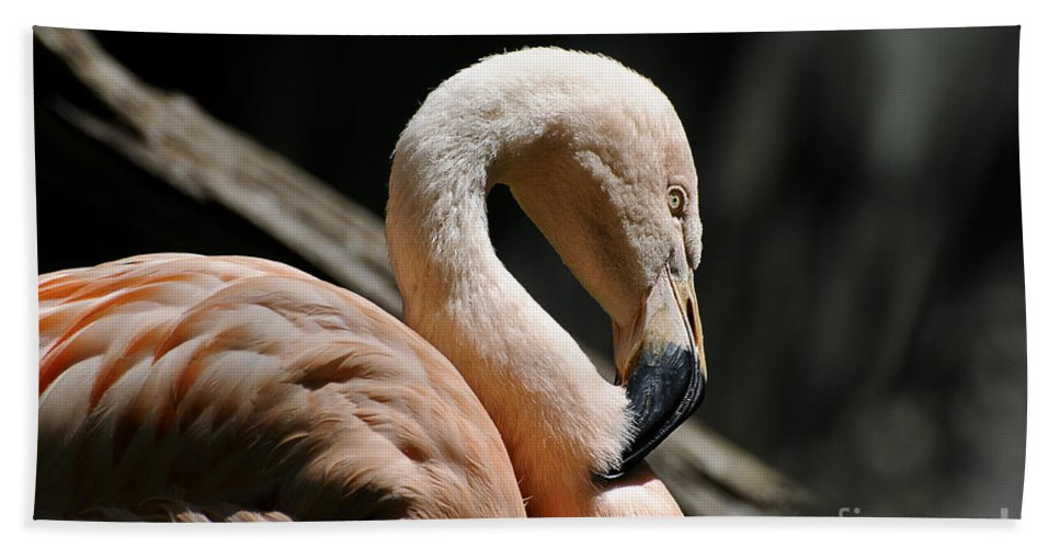 Flamingo Beach Towel featuring the photograph The Sacred Old Flamingoes by Lois Bryan