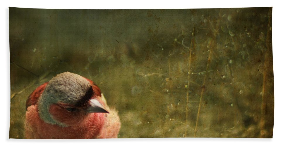 Chaffinch Beach Towel featuring the photograph The Sad Chaffinch by Angel Ciesniarska