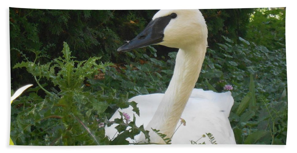 Swan Beach Towel featuring the photograph The Silent Trumpet by LKB Art and Photography