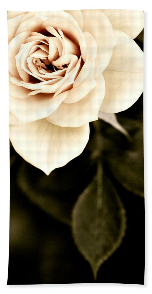 Rose Beach Towel featuring the photograph The Softest Rose by Marilyn Hunt