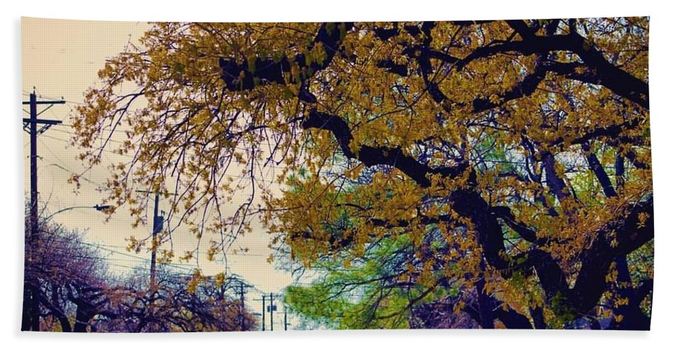 Landscape Beach Towel featuring the photograph The Street Trees by Karl Thompson