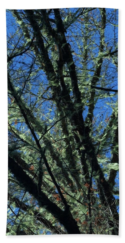 Tree Beach Towel featuring the photograph The Top A Glowing Tree by Teri Schuster