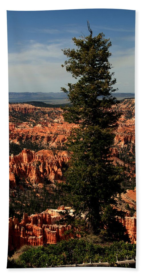 Bryce Canyon Beach Towel featuring the photograph The Tree In Bryce Canyon by Susanne Van Hulst