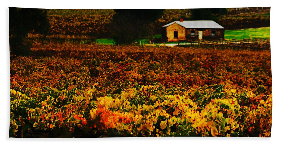 Autumn Beach Towel featuring the photograph The Vines During Autumn by Douglas Barnard